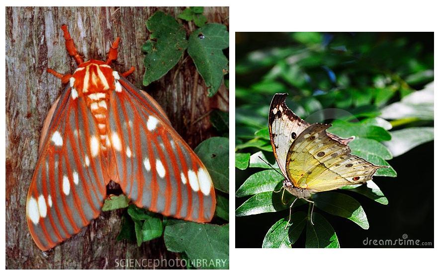 Lo que toda persona debe saber acerca de las mariposas y polillas