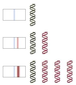 teoriaconservativo